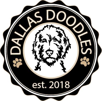 Dallas Doodles